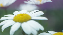 Close Up of Spring Flower Stock Footage