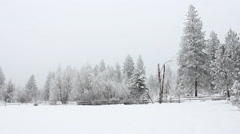 Snow covered field, fence, trees Stock Footage