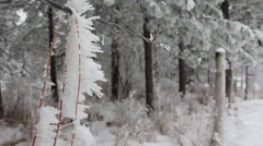 Frost covered pine needle Stock Footage
