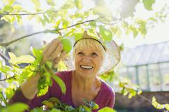 Smiling senior woman picking apple from tree in sunny garden Stock Photos