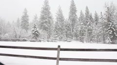 Montana snow fence trees Stock Footage