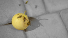 Insects Eat A Pear Stock Footage