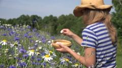 Country girl reap flower blossom in wicker basket in field. 4K Stock Footage