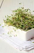 Fresh green alfalfa sprouts - stock photo