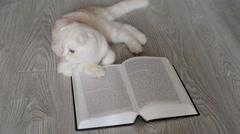 Beige Scottish Fold kitten near  open book Stock Footage
