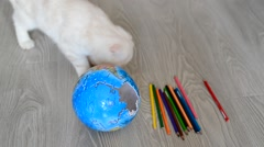 Kitten plays with colored pencils and broken globe Stock Footage