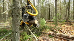 View of logger cuts down tree and its branches - stock footage
