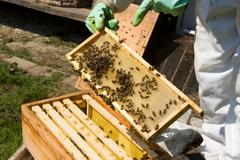 Checking a honeycomb - stock photo