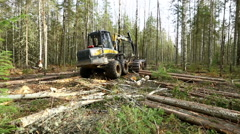 Forestry. View of logger moves through woods Stock Footage