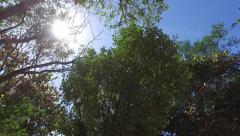 Sun peeking through trees as camera pans - stock footage
