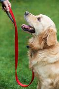 Dog Obedience Training Stock Photos