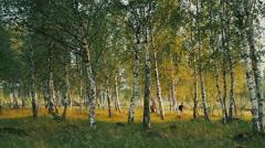 Three children in forest 3 Stock Footage