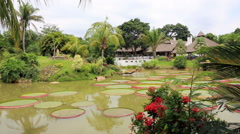 Tropical garden with pond, Victoria Regia and palms Stock Footage