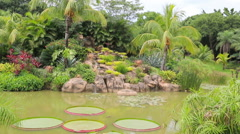 Tropical garden with pond, waterfall, Victoria Regia and palms Stock Footage