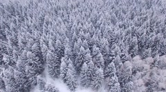 Aerial frozen pine and fir trees in the snow in winter.  - stock footage