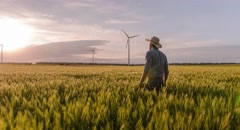 Ambitious Farmer Wheat Field Windmill Sunlight Landscape Nature Agriculture Stock Footage
