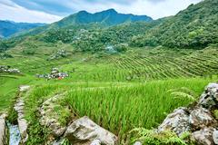 rice paddy terrace fields  Philippines - stock photo