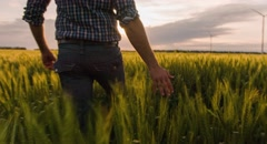 Farmer Midsection Walking Wheat Field Sunlight Landscape Nature Agriculture Stock Footage
