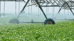 Agriculture, soy bean field watering, zoom out Stock Footage