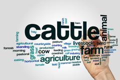 Cattle word cloud concept - stock photo