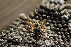 Reversed hornet's nest. Stock Photos
