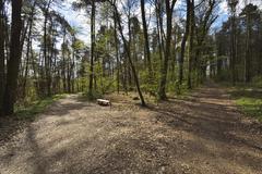 Forked Path in Forest with Bench, Kreuzwertheim, Spessart, Stock Photos