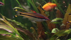 The Underwater World Of Fish 3 Stock Footage