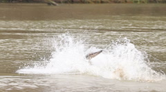 Dog German shepherd plating in the river shaking off water Stock Footage