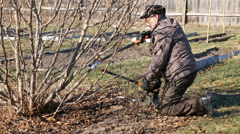 Senior elderly man gardener prunes bushes twigs - stock footage