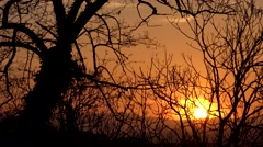 4K Timelapse sun silhouette go down mountain forest tree branch sunset sunrise   - stock footage