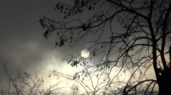 4K Sun silhouette covered cloud misty day tree branch wildlife natural emblem  Stock Footage