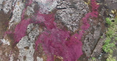 Close Up Birds-Eye shot of Cano Cristales, the River of Seven Colors - stock footage