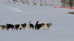 Dog sled rides for hire in the snow. Stock Footage