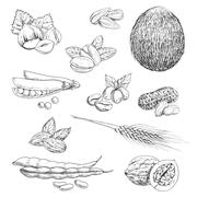 Nuts, beans, seeds and wheat sketches Stock Illustration