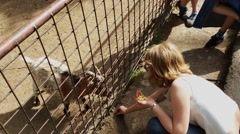 The Goat is Eating Feed from Girls's Hands Stock Footage