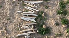 Row of bones on the ground Stock Footage