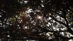 Beautiful lens flare trough the tree canopy Stock Footage