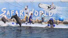 Dolphin show in the Safari World. Bangkok, Thailand Stock Footage