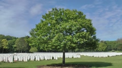 WW1 world war one war cemetry graves single tree - stock footage