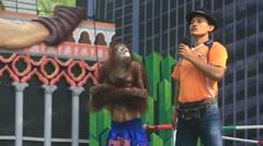 Orangutan show in the Safari World. Bangkok, Thailand - stock footage