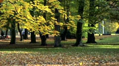 Slowmotion detail of fallen leaves in autumnal park Stock Footage