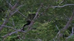 Nicaragua Monkeys - stock footage