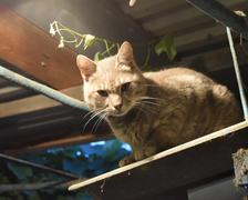 Smoky the cat in light of an incandescent lamp Stock Photos