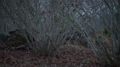 Ruins in dark forest Stock Footage