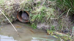 4K Water Vole Emerging out of a Drain Pipe into Water Stock Footage