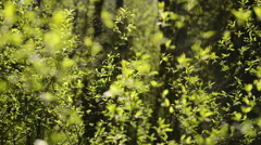 Green abstraction in the woods - stock footage