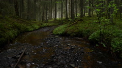 Small river deep in the magic forest - stock footage