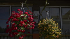Red and yellow flowers on the wall of old house Stock Footage