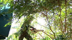 Man Doing Tree Cutting and Removal Work Stock Footage