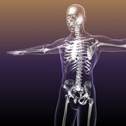 Human Skeleton with Body transparent - 3D model